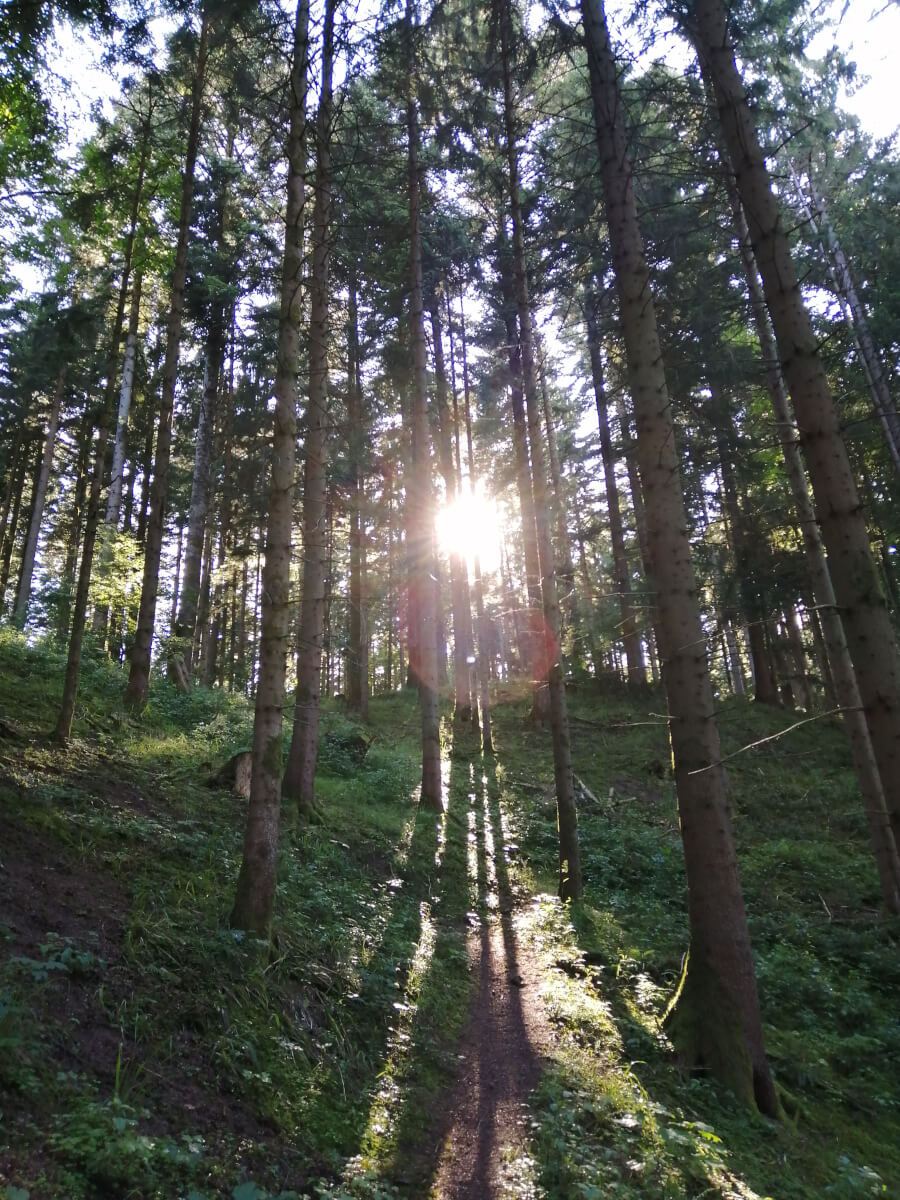 gesund urlaub mit forest bathing