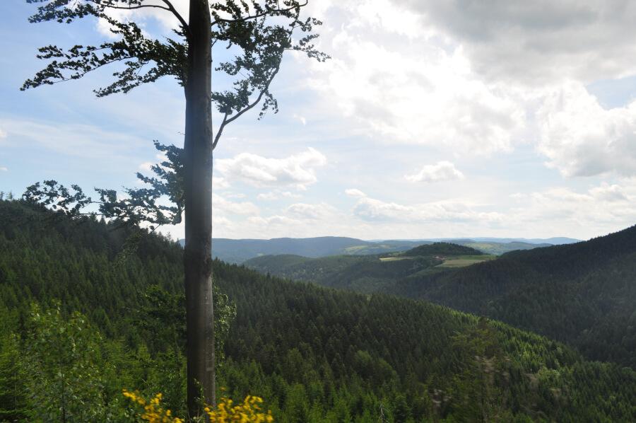 Orte im Schwarzwald zum Urlaub machen